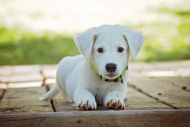 How To Clean Pet Dog Urine From Artificial Grass Jus Turf